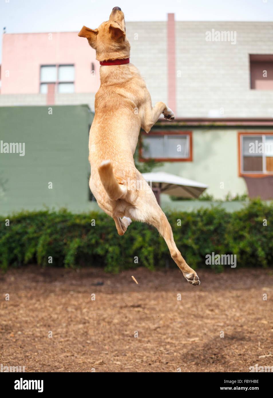 hund springt hoch