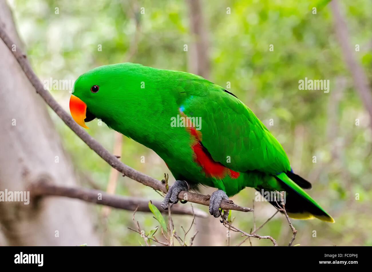 Papagei Stockbild