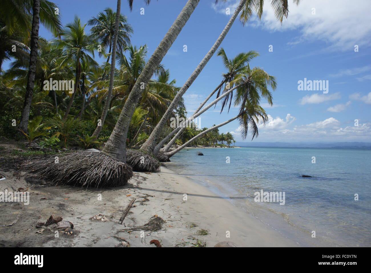 Impressionen vom sonnigen und grünen Costa Rica Stockbild
