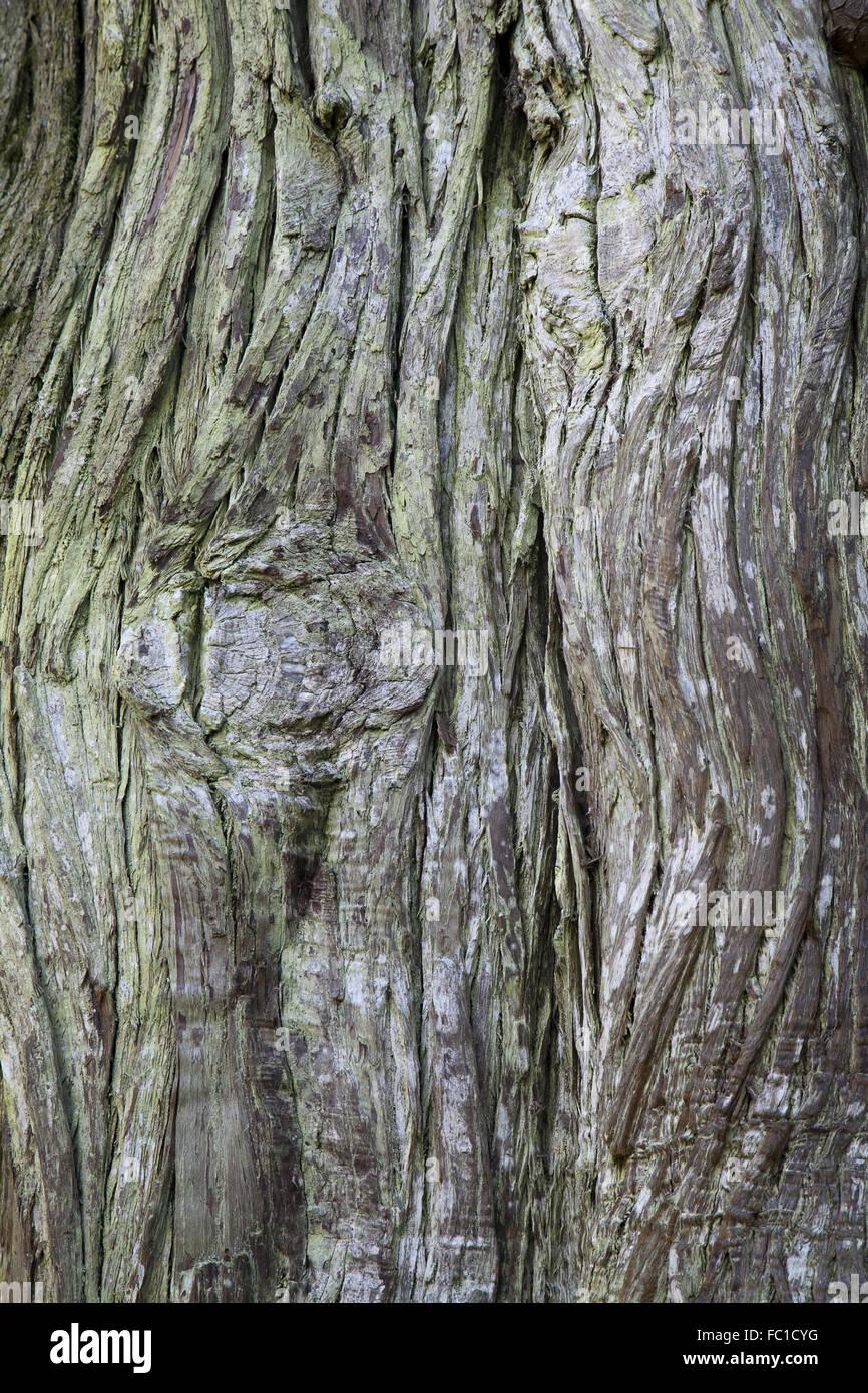 Textur der alten grauen holprigen Baumrinde Stockbild