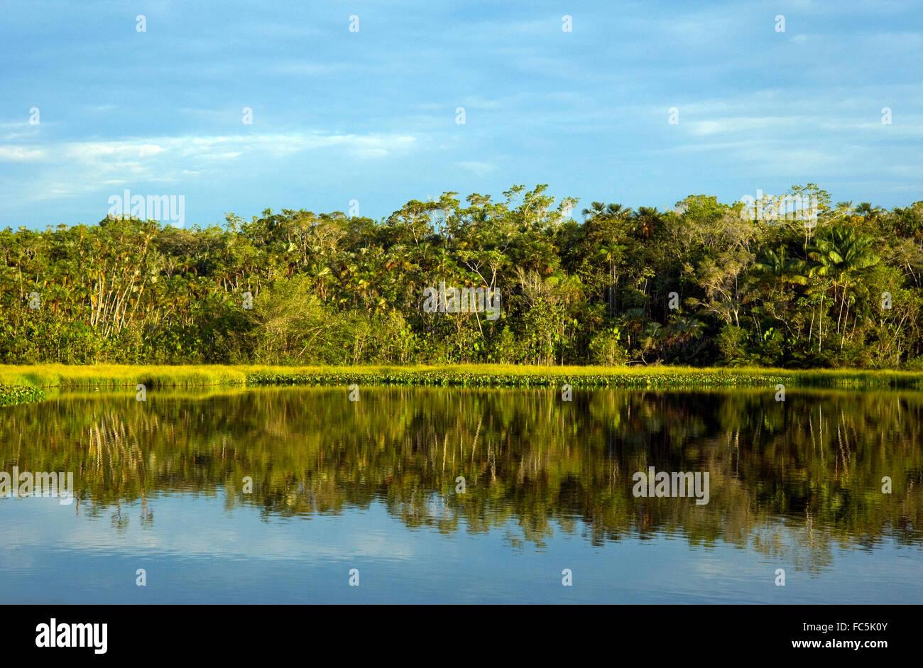 Reflexionen auf dem Amazonas in Ecuador Stockbild