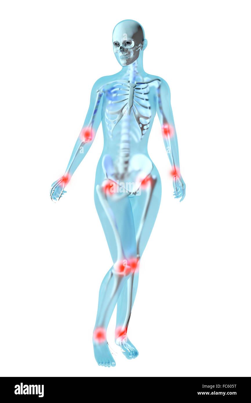 Tolle äußeren Weiblichen Genitalien Anatomie Zeitgenössisch ...