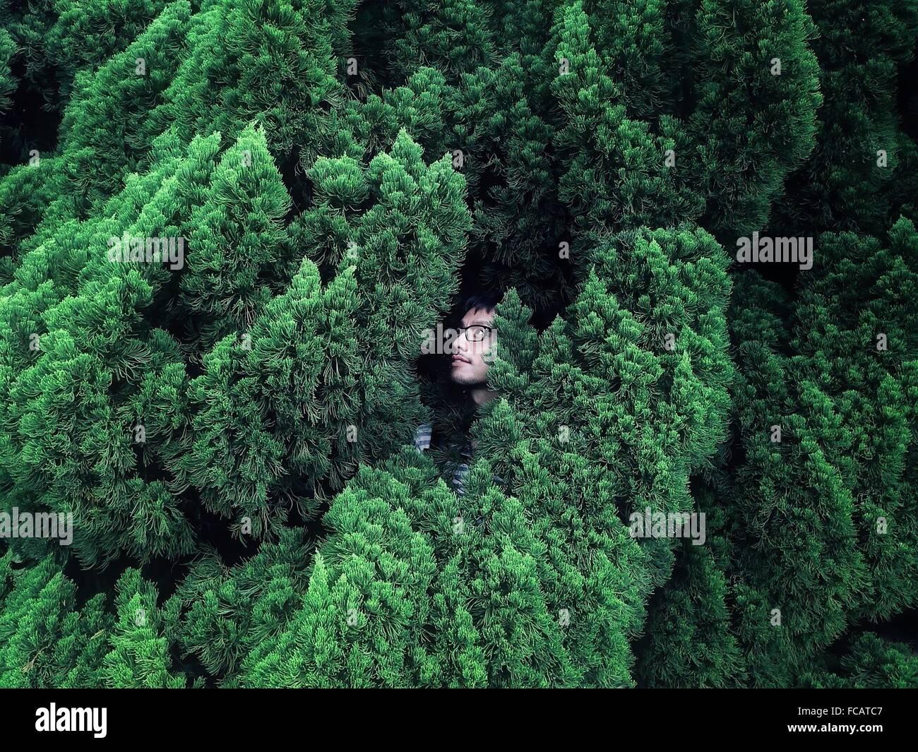 Junger Mann versteckt im Busch Stockbild