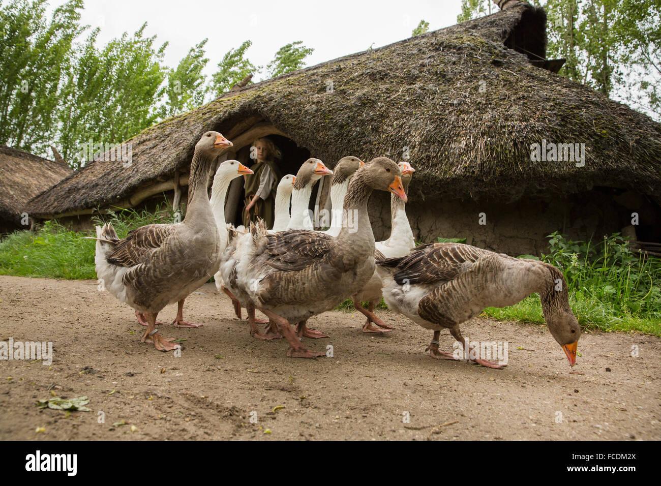 Niederlande, Alphen Aan De Rijn, Archeon. Stellen Sie Schüsse vom Kino film Holland, der lebendige Delta. Stockbild