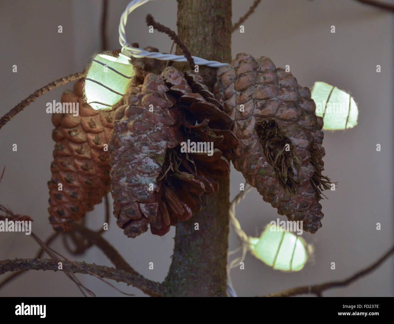 Weihnachtsbeleuchtung Tannenzapfen.Drei 3 Tannenzapfen Auf Einem Ast Mit Beleuchteten Silk Cocoon