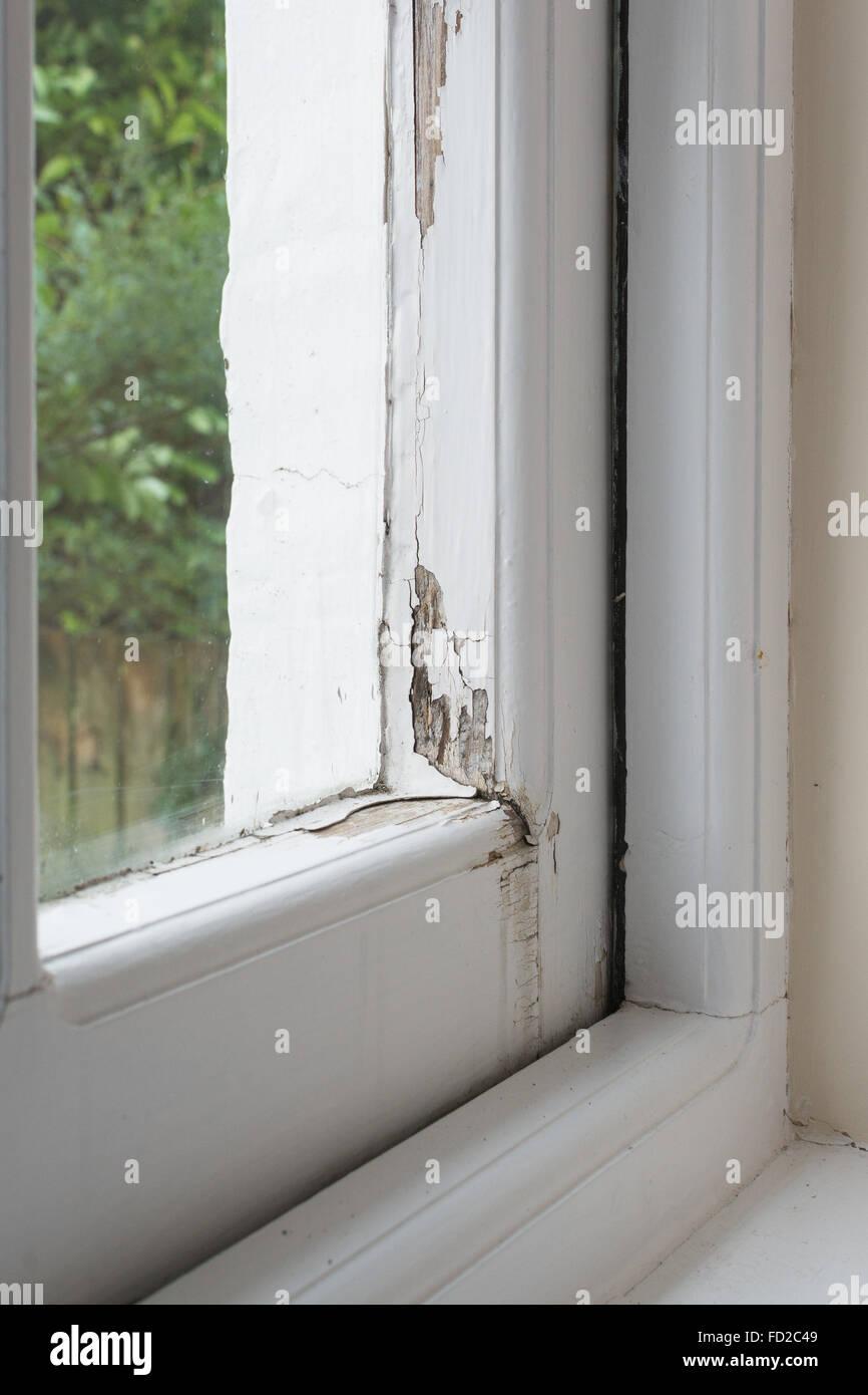 Kondensation und Wasserschäden an traditionelle verglaste bewaldeten Einzelfenster Rahmen einschließlich Stockbild