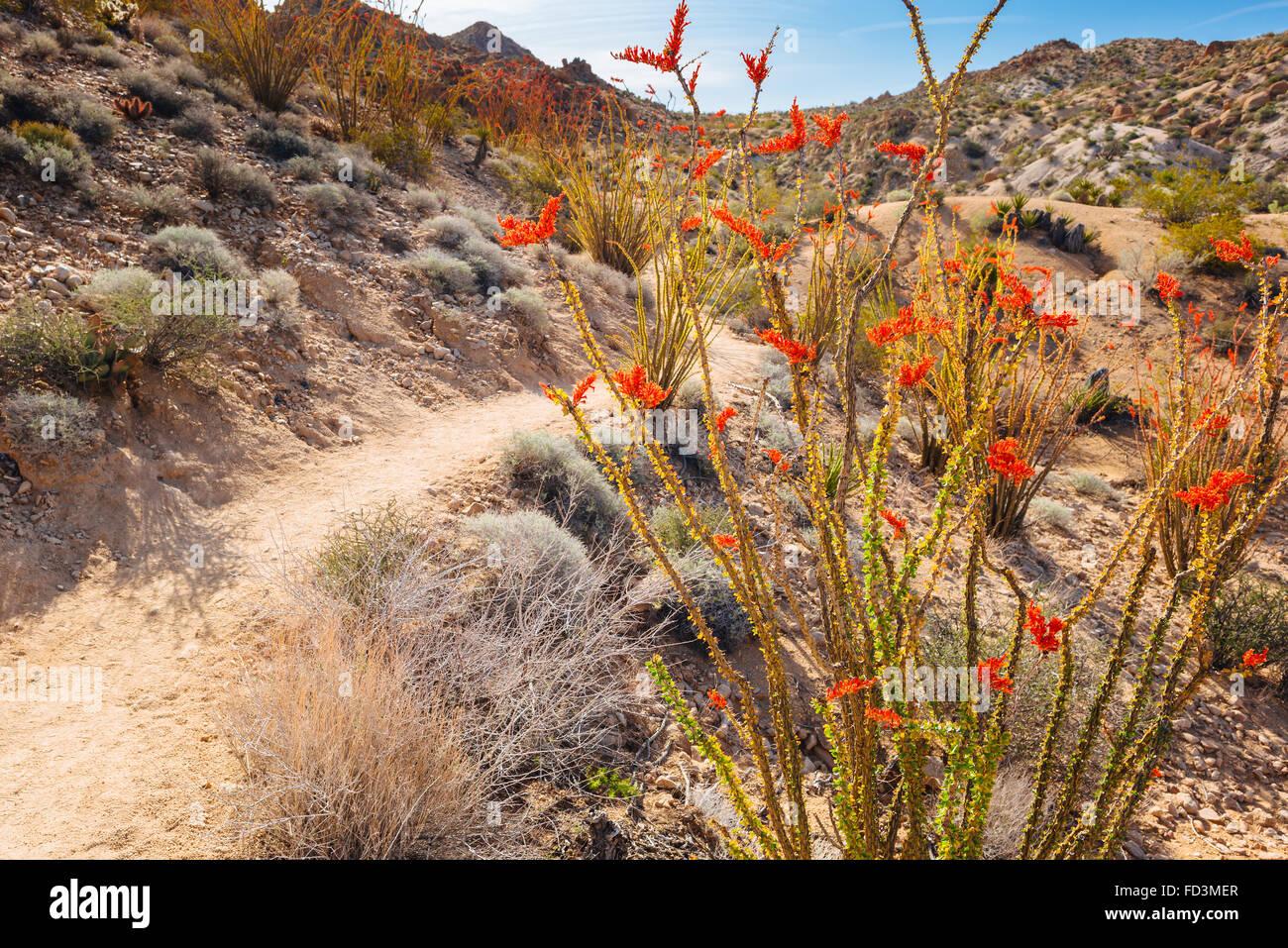 Die verlorenen Palms Canyon Wanderweg in Joshua Tree Nationalpark, Kalifornien Stockbild