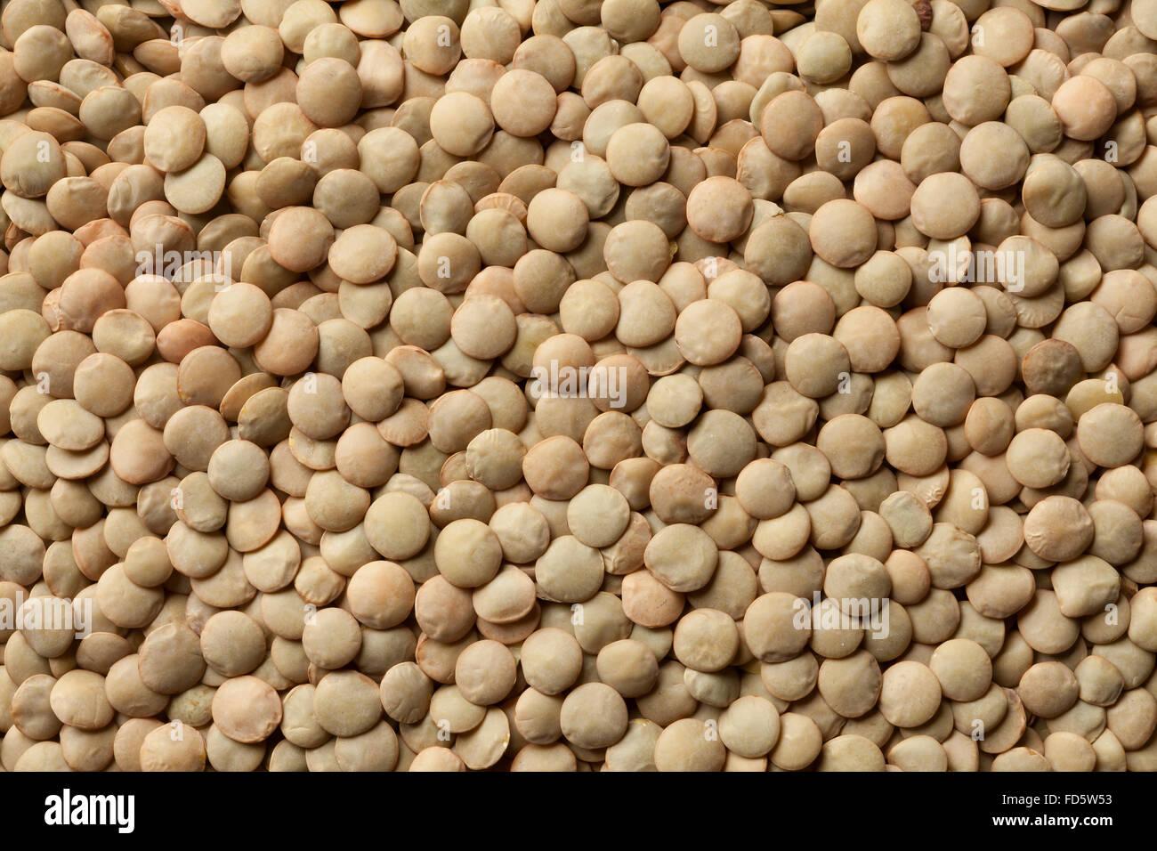 Getrocknete braune Linsen full-frame Stockfoto, Bild: 94171871 - Alamy