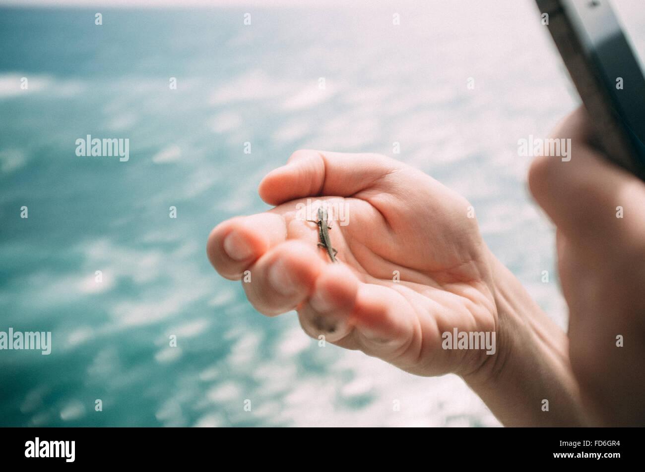 Insekt auf menschliche Hand Stockbild