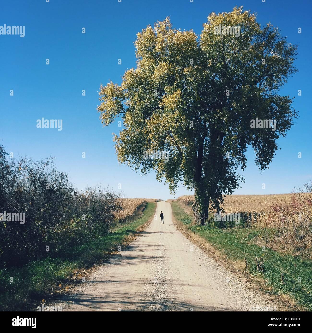 Mitte Fernsicht auf Mann auf Feldweg von Baum Stockbild