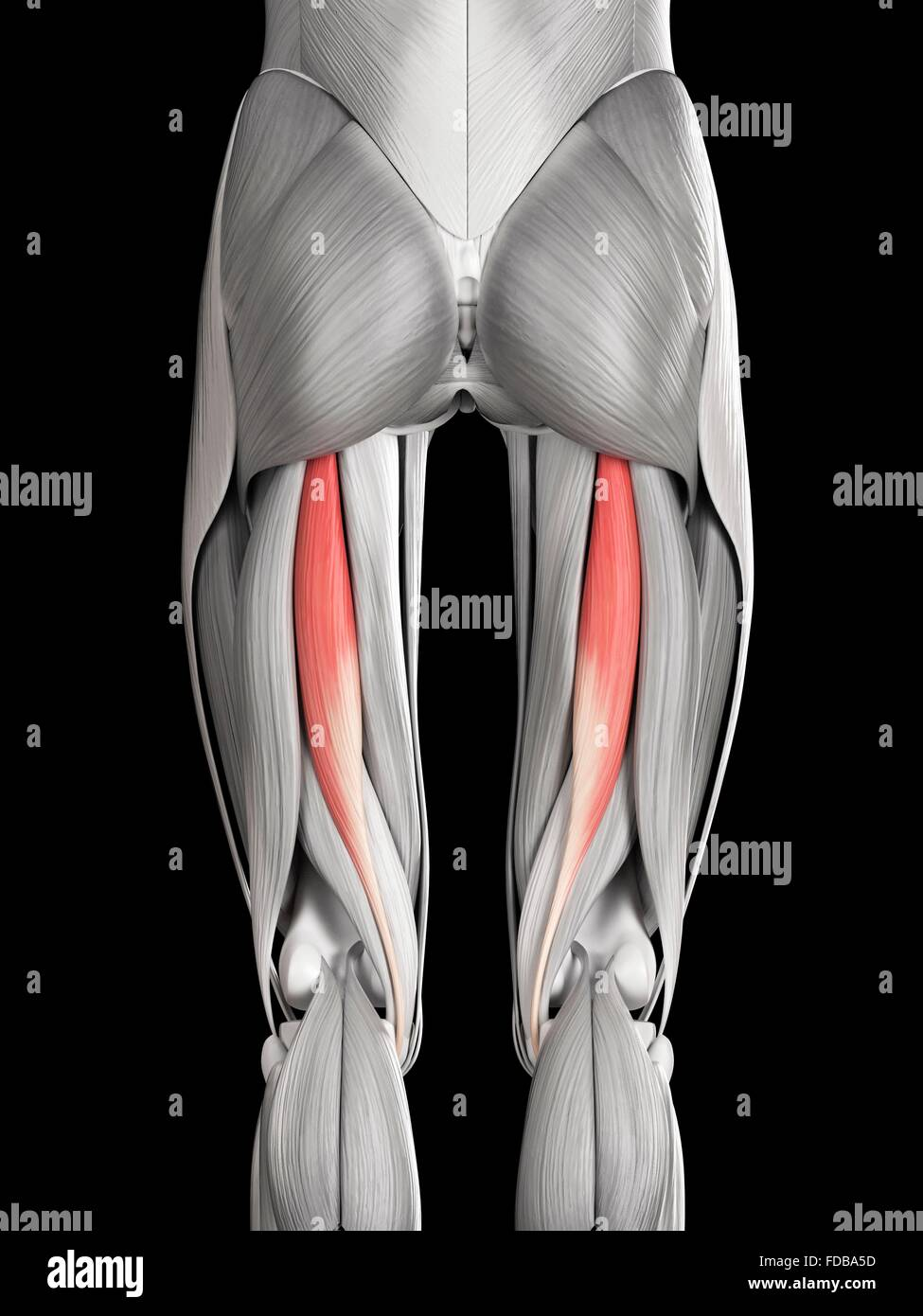 Großzügig Muskeln Im Bein Diagramm Bilder - Menschliche Anatomie ...