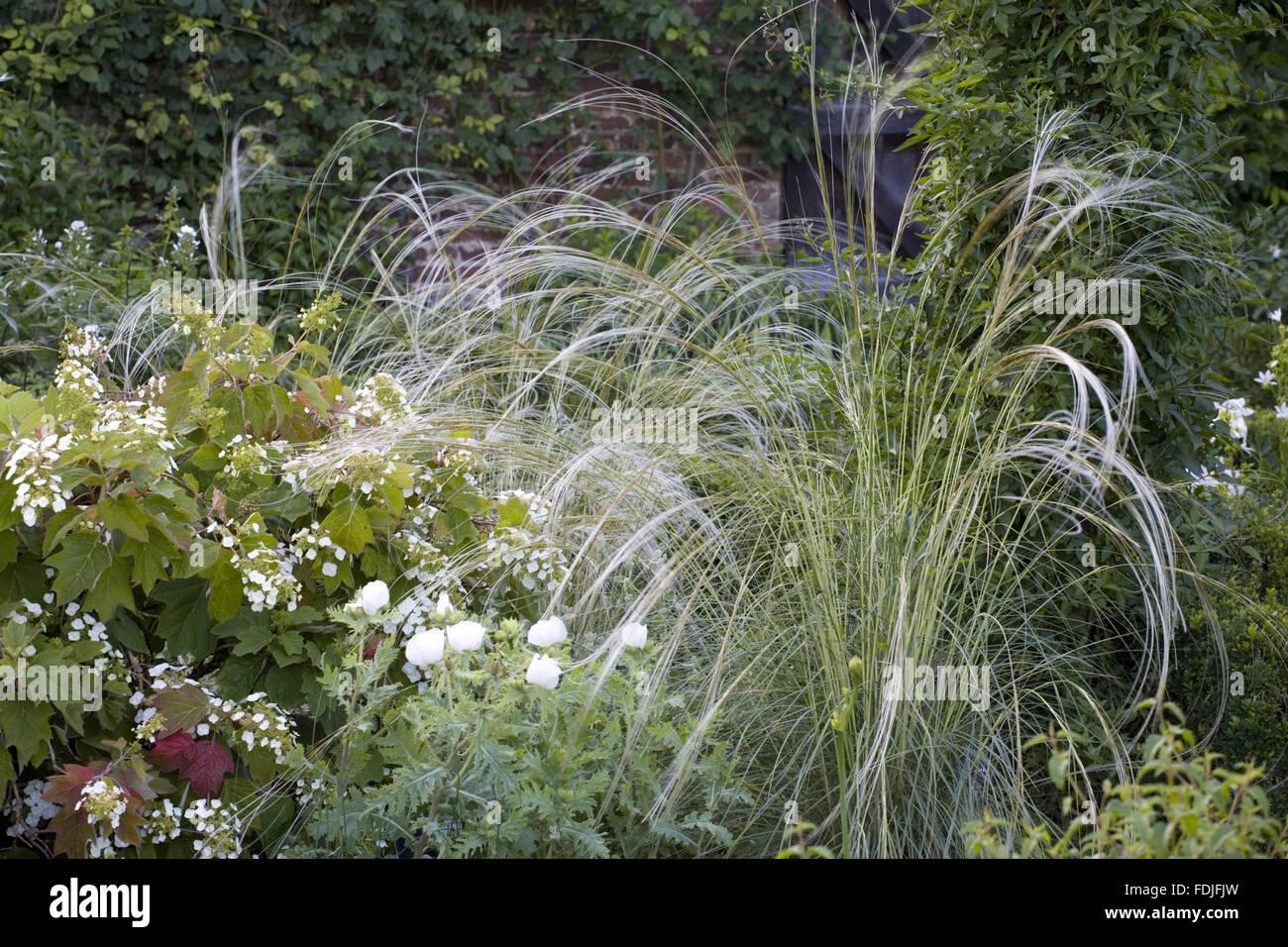 Weißer Garten Sissinghurst stipa barbata und hydrangea quercifolia im weißen garten