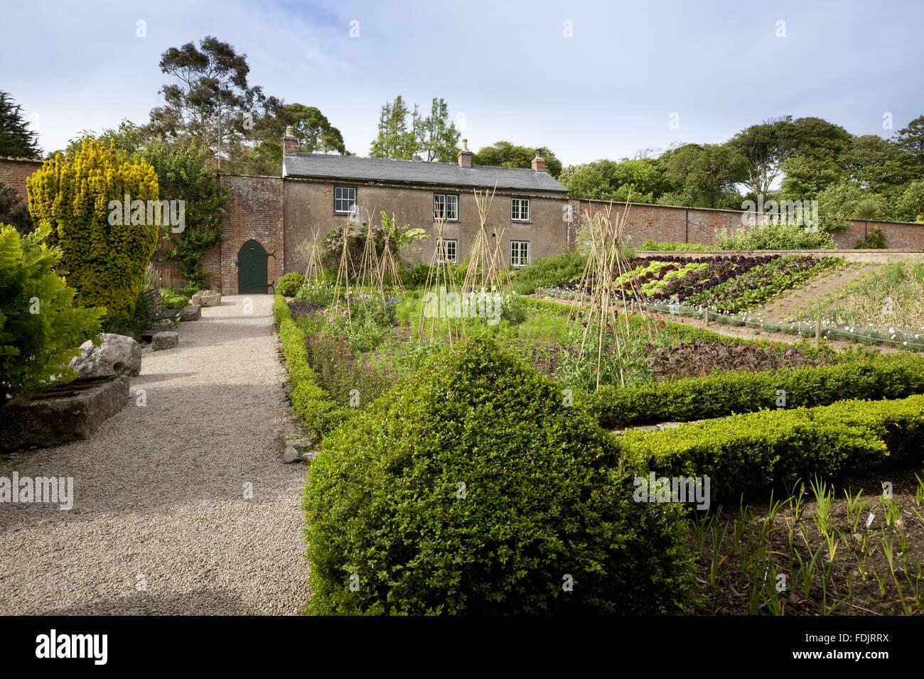 Der Gemüsegarten im Juni im Trengwainton Garden, Cornwall. Der ...