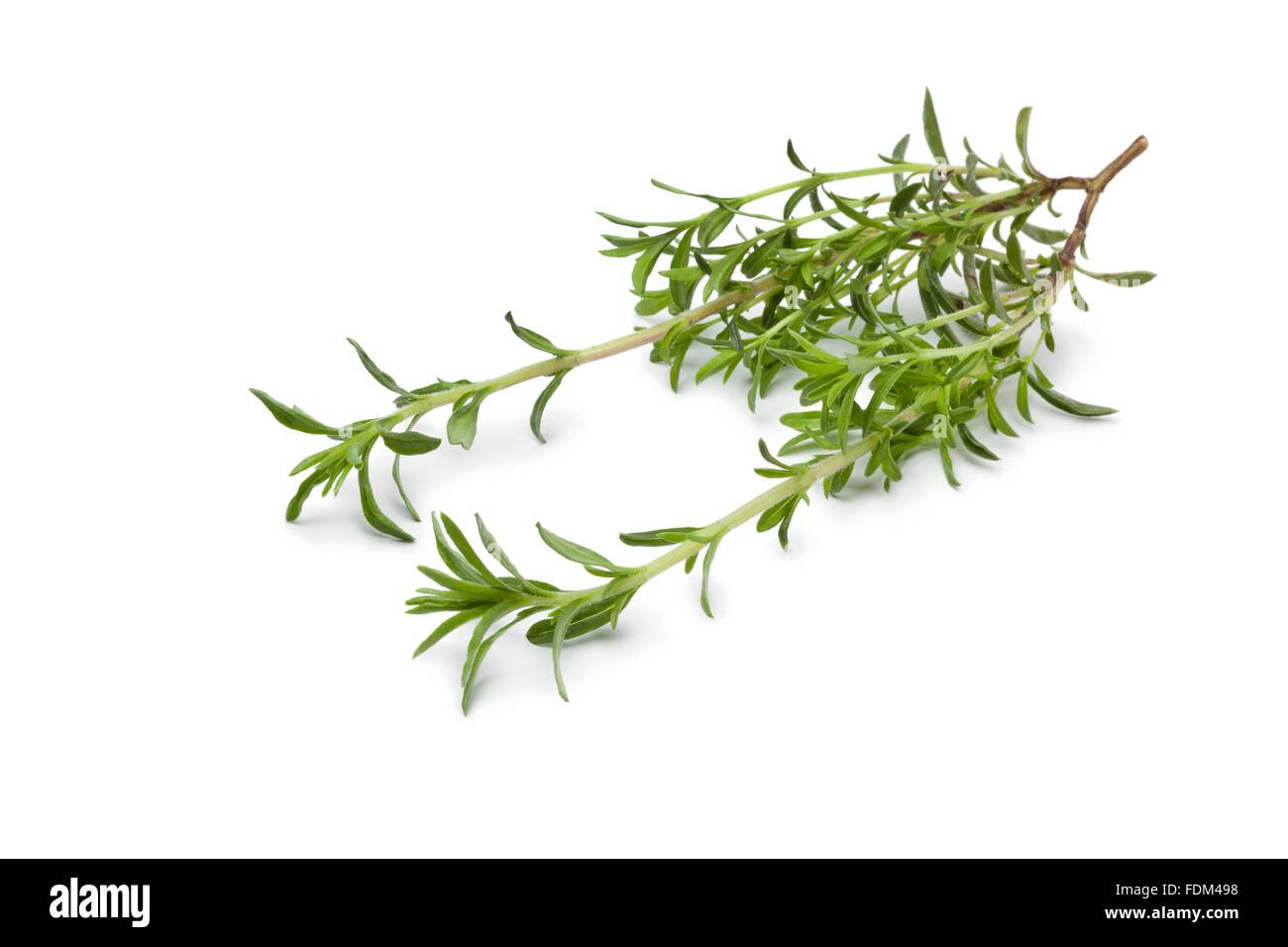 Frischen Zweig der Winterbohnenkraut auf weißem Hintergrund Stockbild