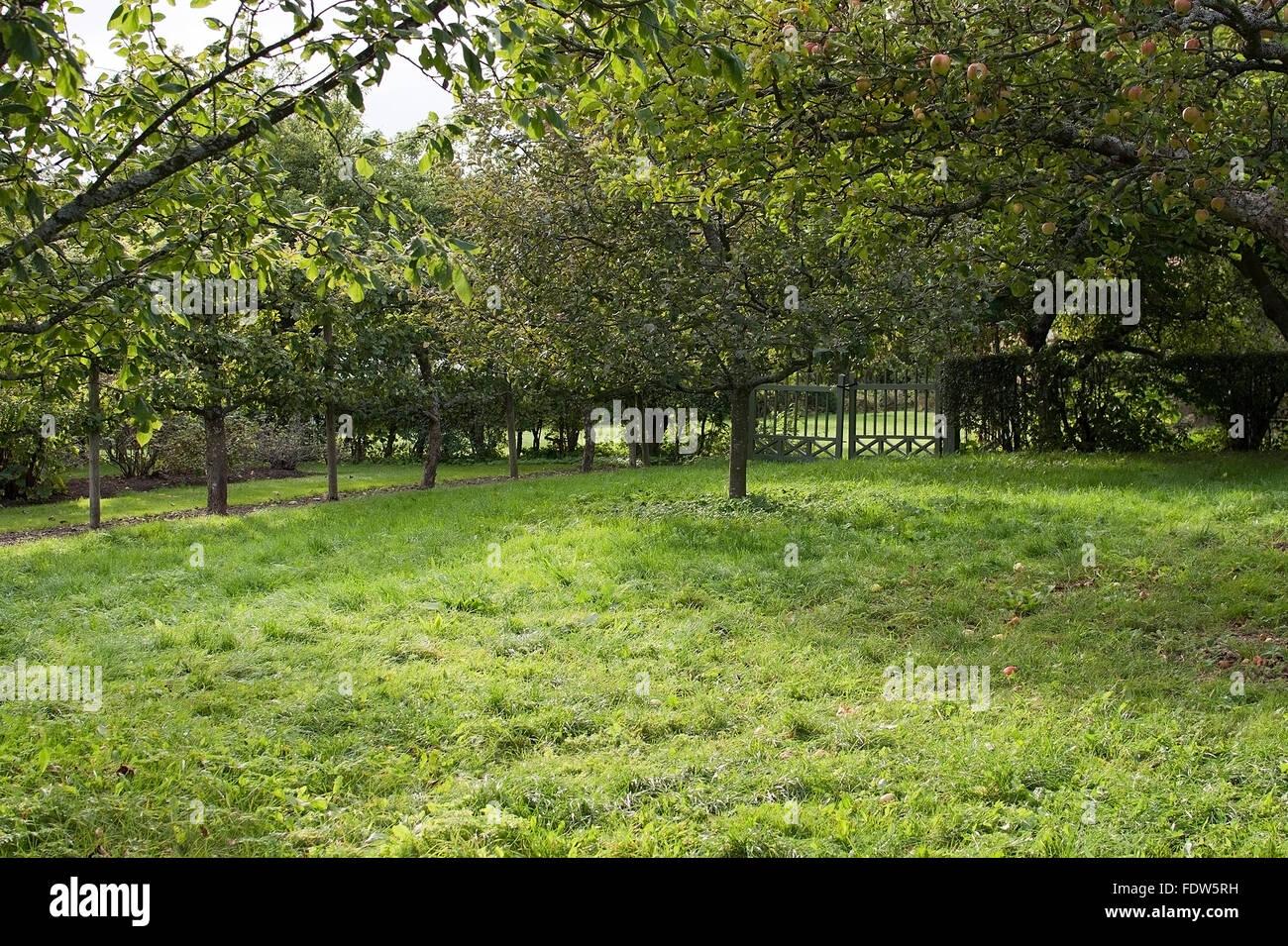 Freiraum Garten Mit Metalltor Grün Rasen Rasen Und Apfel Bäume In