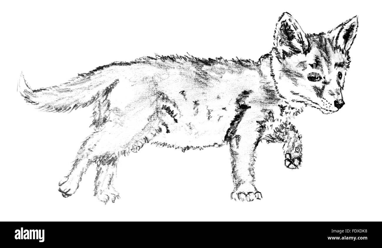 Line Drawing Puppy Stockfotos & Line Drawing Puppy Bilder - Alamy