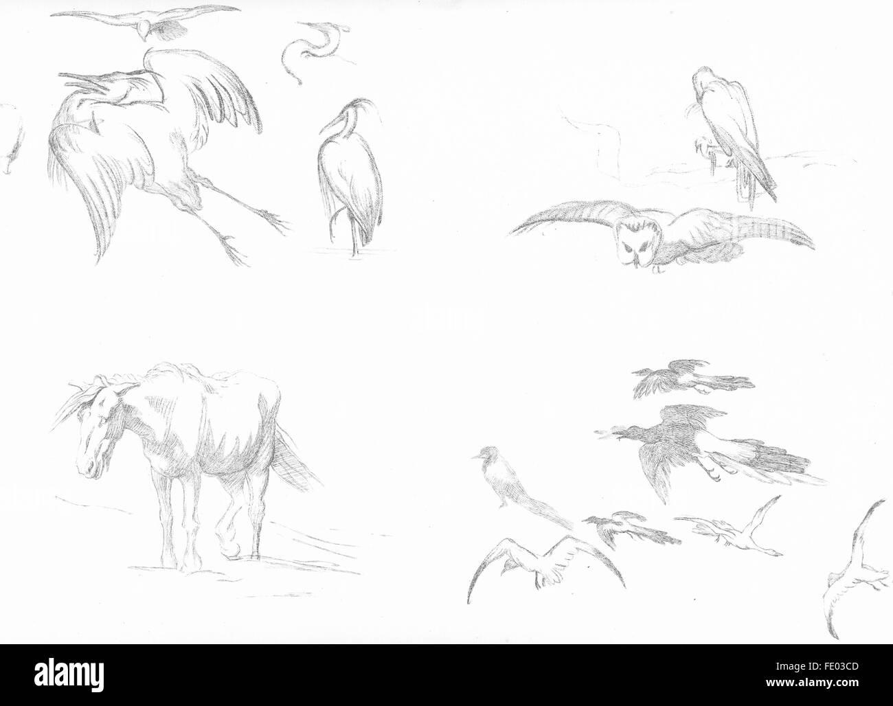 Vögel: Beispiel 7-Landseer, antike print c1880 Stockbild