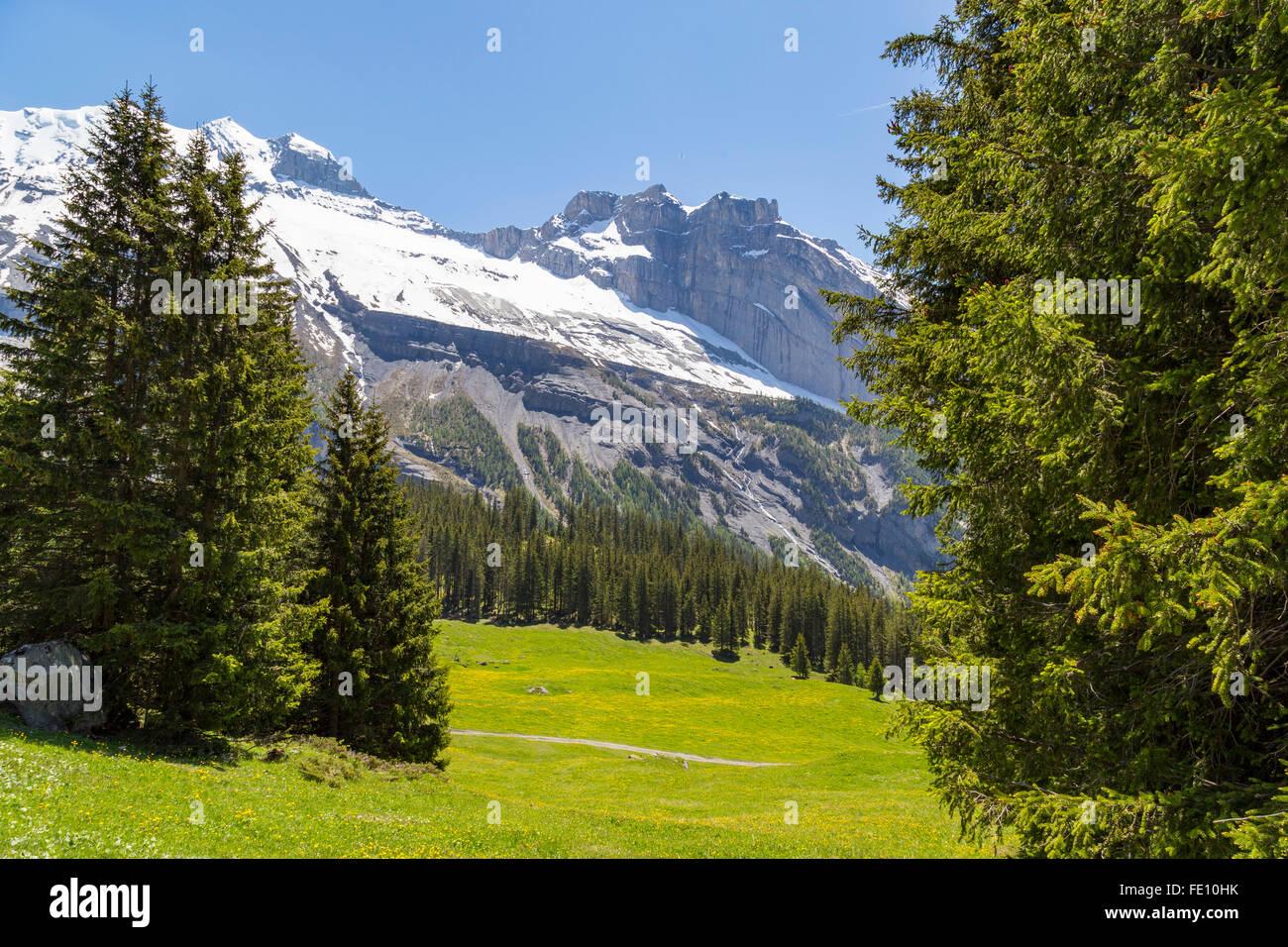 Herrlichen Blick auf die Schweizer Alpen und Wiesen in der Nähe von Oeschinensee (Oeschinensees See), im Berner Stockbild