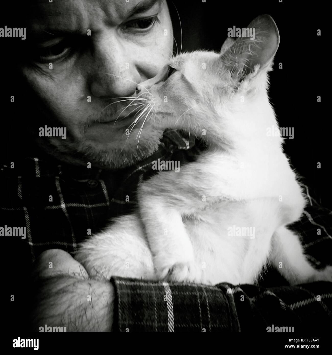 Mann hält während starrte weiße Katze Stockbild