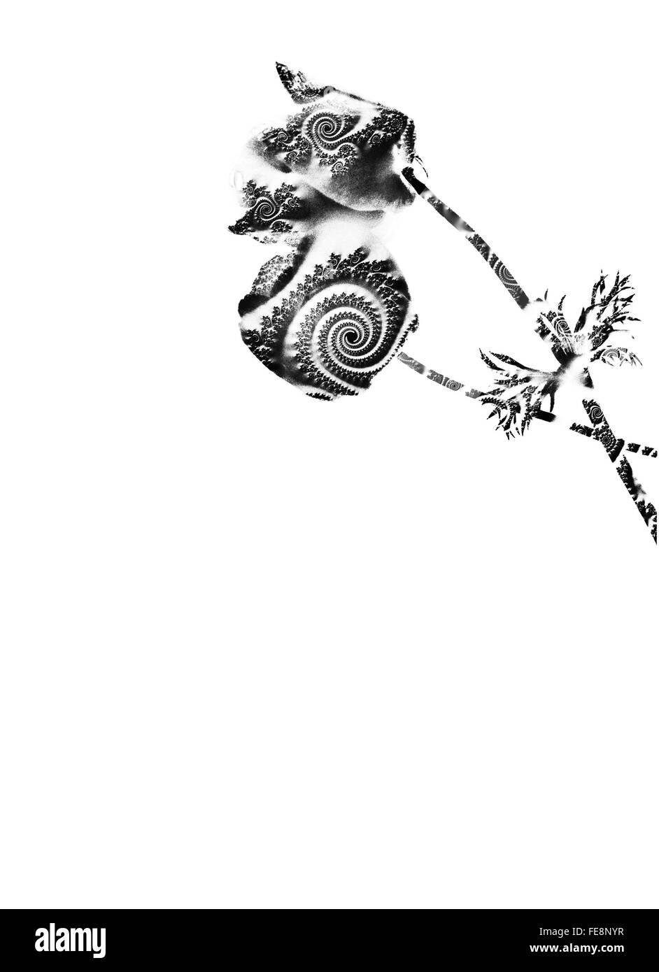 Nahaufnahme des Blumenmusters auf weißen Hintergrund Stockbild