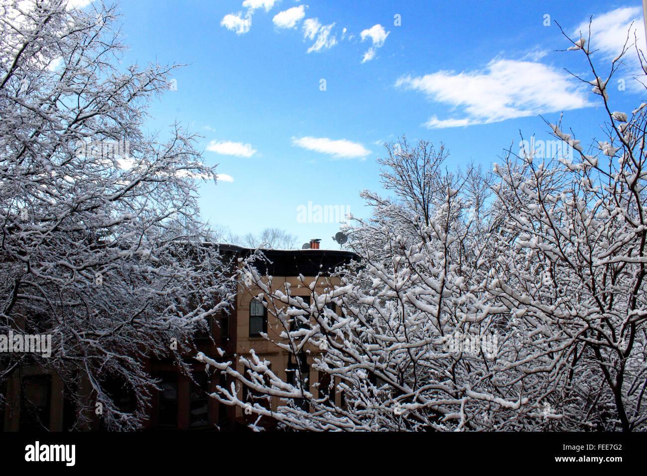 Schnee bedeckten Baum mit blauem Himmel und Wolken Stockbild