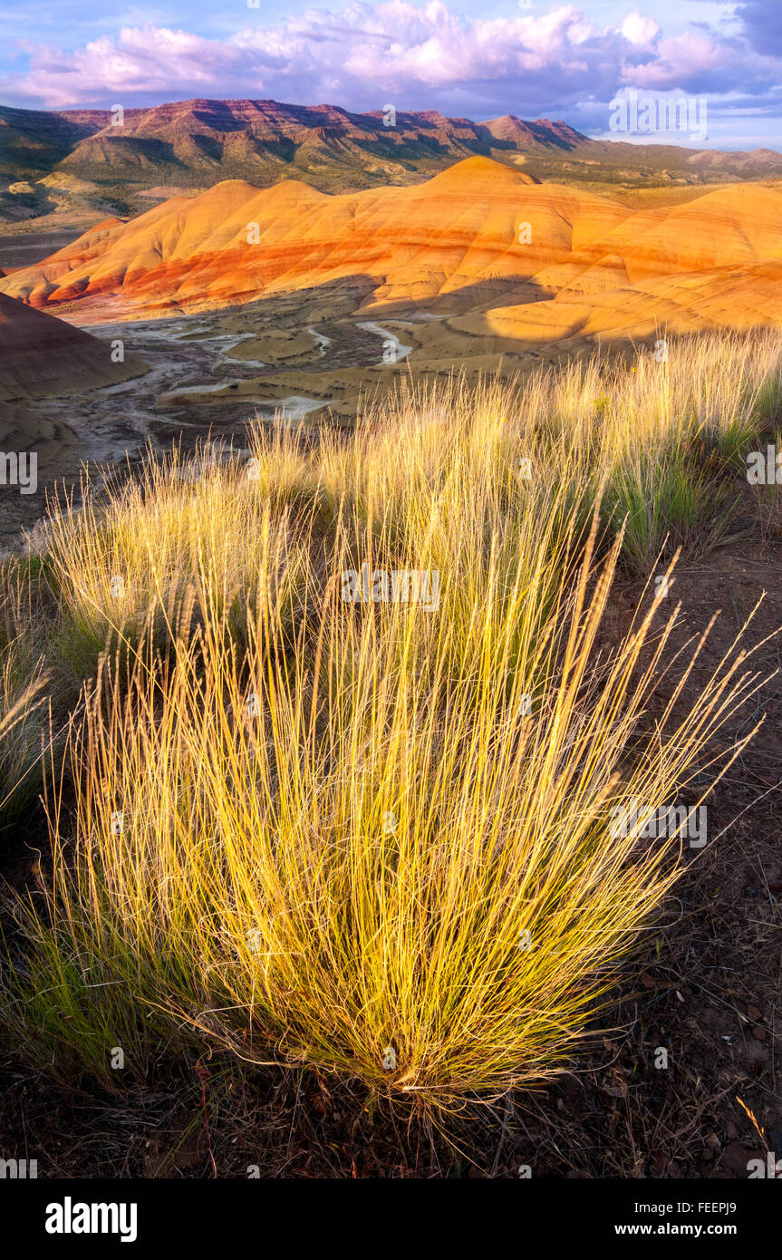 Große Trauben von Rasenfläche den Hang in oberhalb der Painted Hills, und die untergehende Sonne Farben am Himmel. Stockfoto