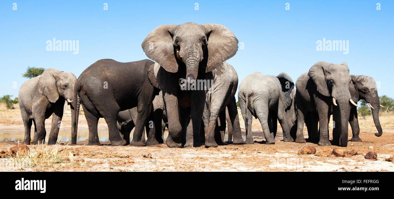 Elefanten an einer Wasserstelle Stockbild