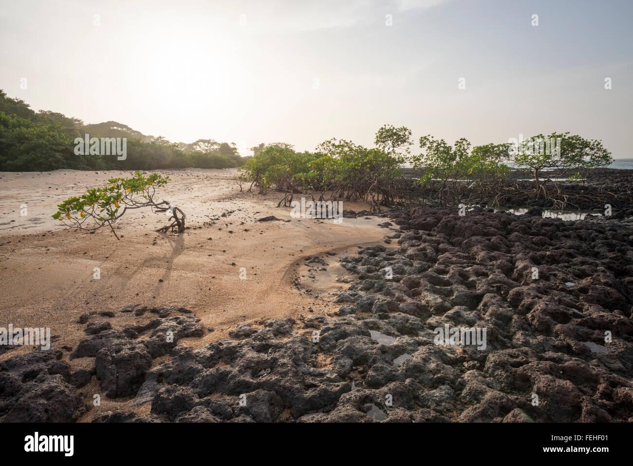 Mangroven wachsen auf vulkanischem Gestein nahe der Küste der Insel Poilao in den Bijagos Inseln von Guinea Stockbild