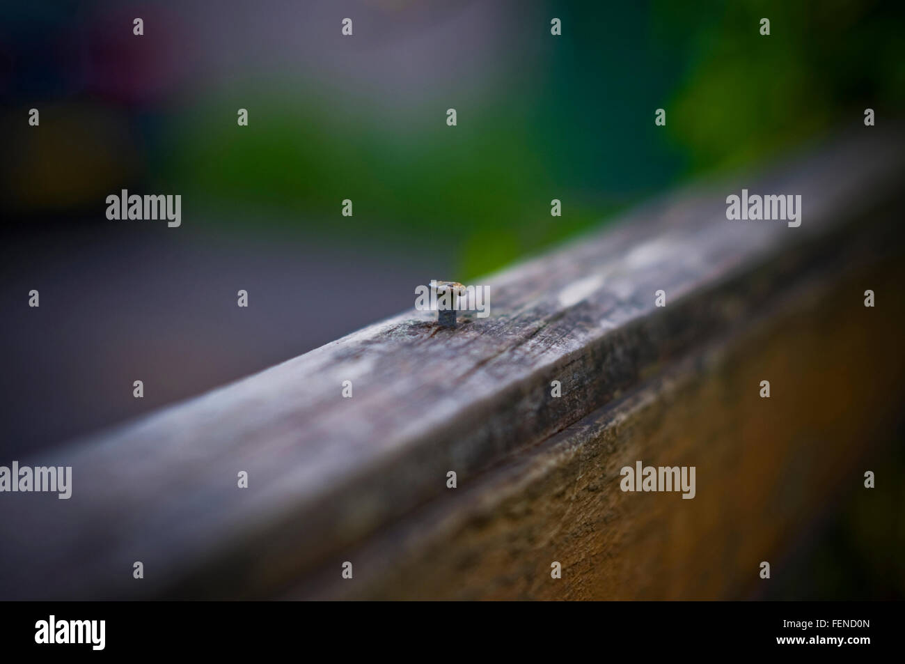 Close Up Nail In Wood Stockfotos & Close Up Nail In Wood Bilder - Alamy