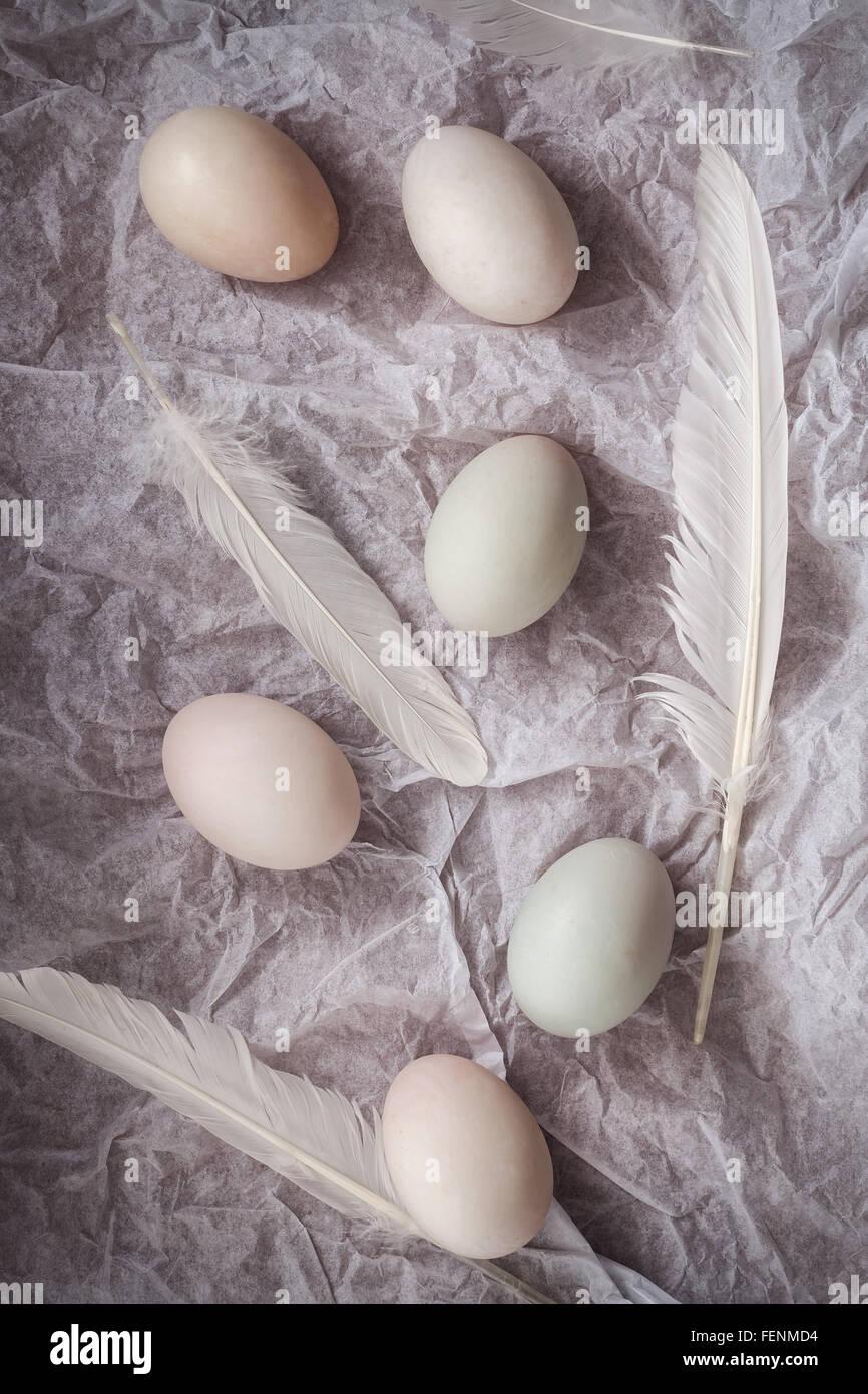 Enteneier flach legen Stillleben mit Essen stilvoll frische Rohstoff Geflügel gesundes Cholesterin Protein Vitamin Stockfoto