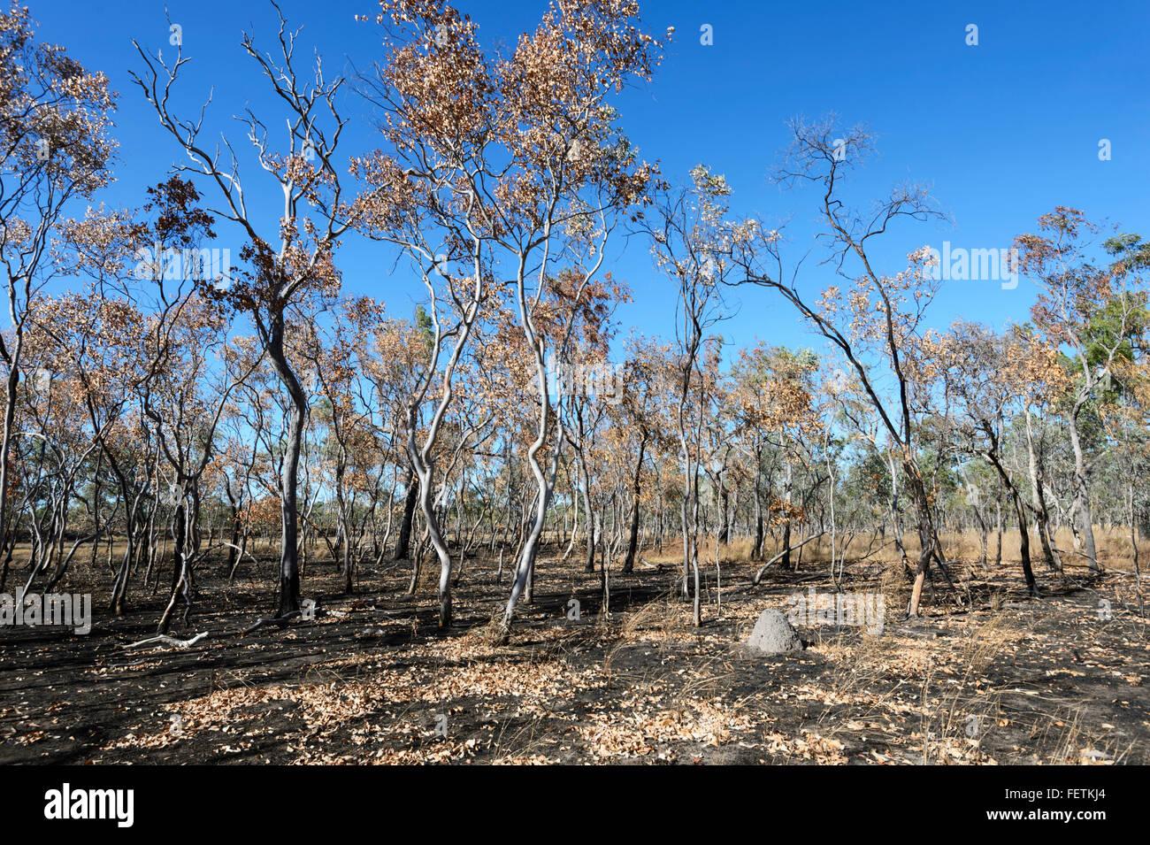 Bushfire Schaden, Gulf Savannah, Queensland, Queensland, Australien Stockbild