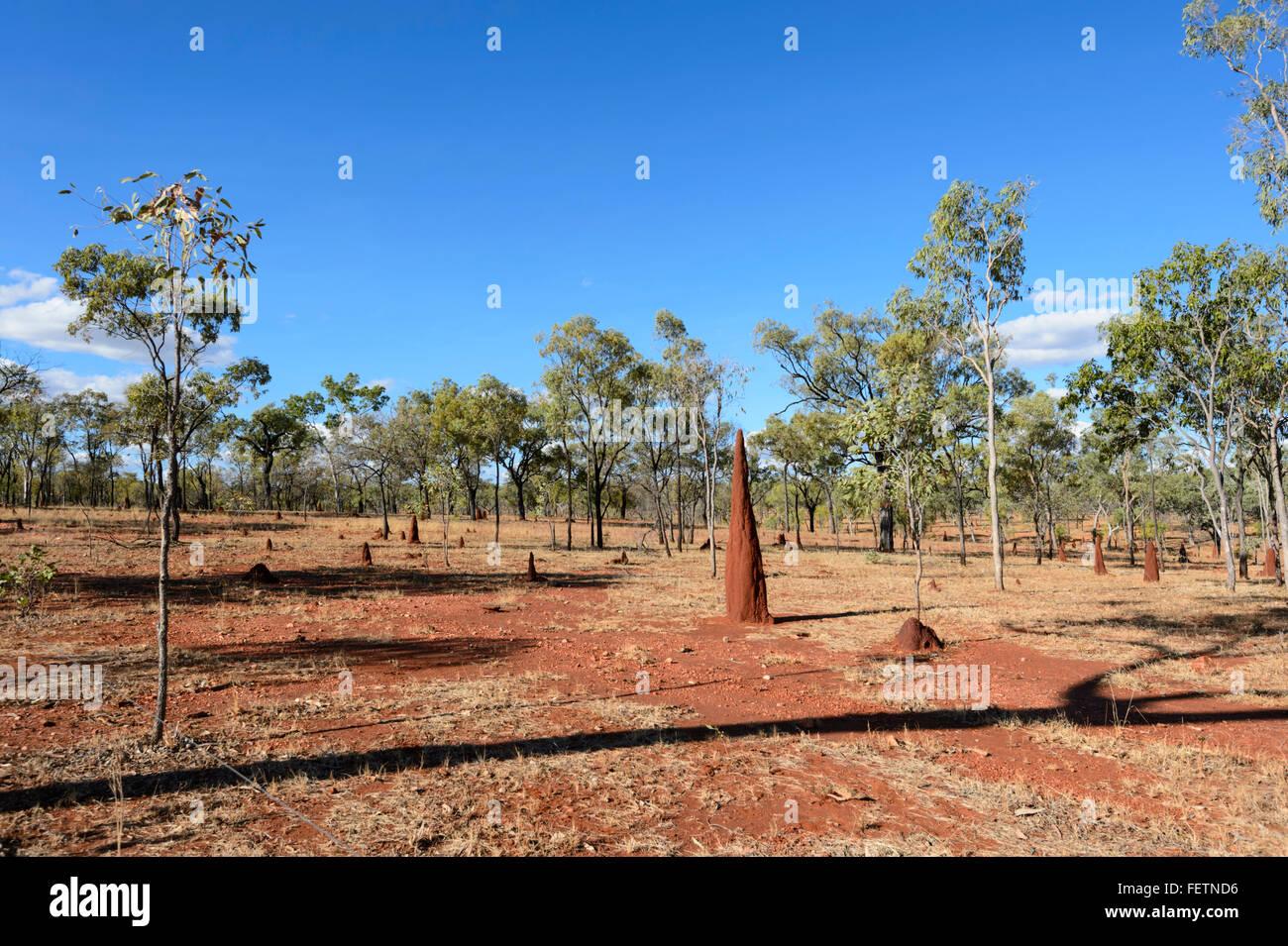 Termitenhügel, Gulf Savannah, Queensland, Australien Stockbild