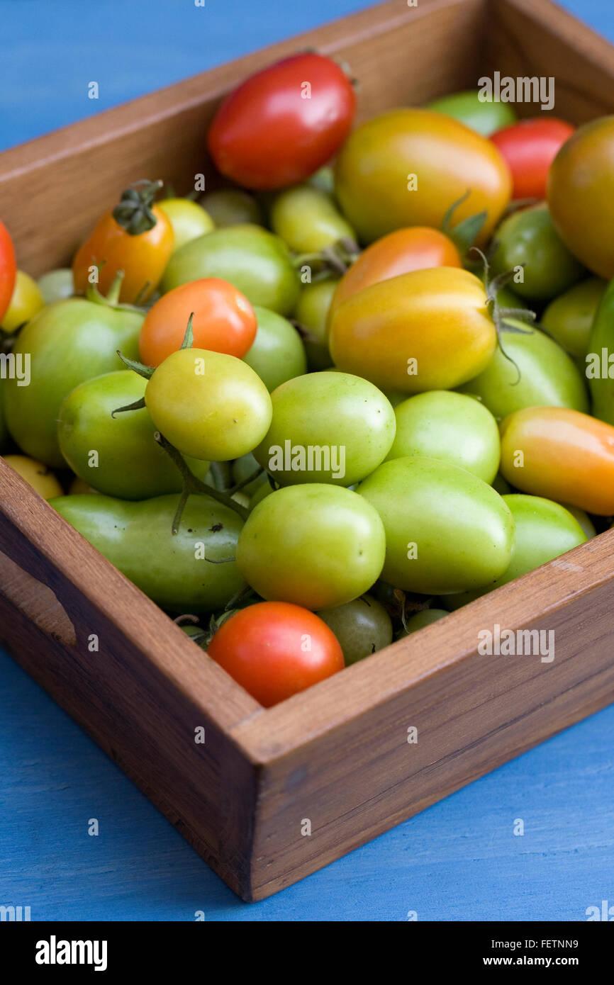 Lycopersicon Esculentum. Reife Tomaten am Ende des Sommers in einem Holztablett. Stockbild