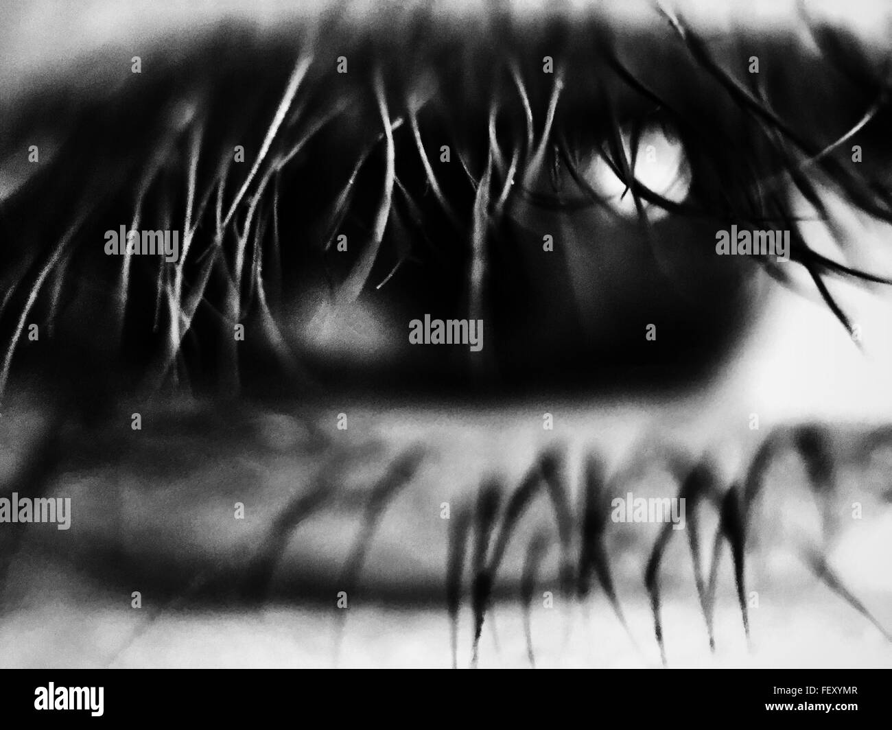 Makroaufnahme des menschlichen Auges Stockbild
