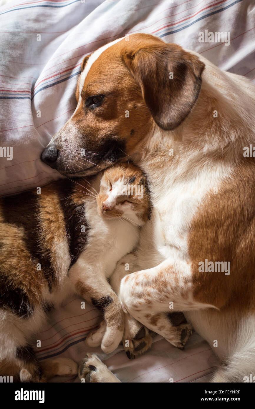 Ein brauner Hund und Katze aufwachen umarmt von einem Nickerchen Stockbild