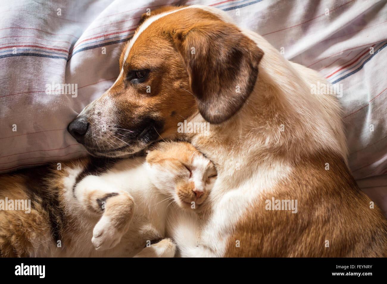 ein brauner hund und katze aufwachen umarmt von einem. Black Bedroom Furniture Sets. Home Design Ideas