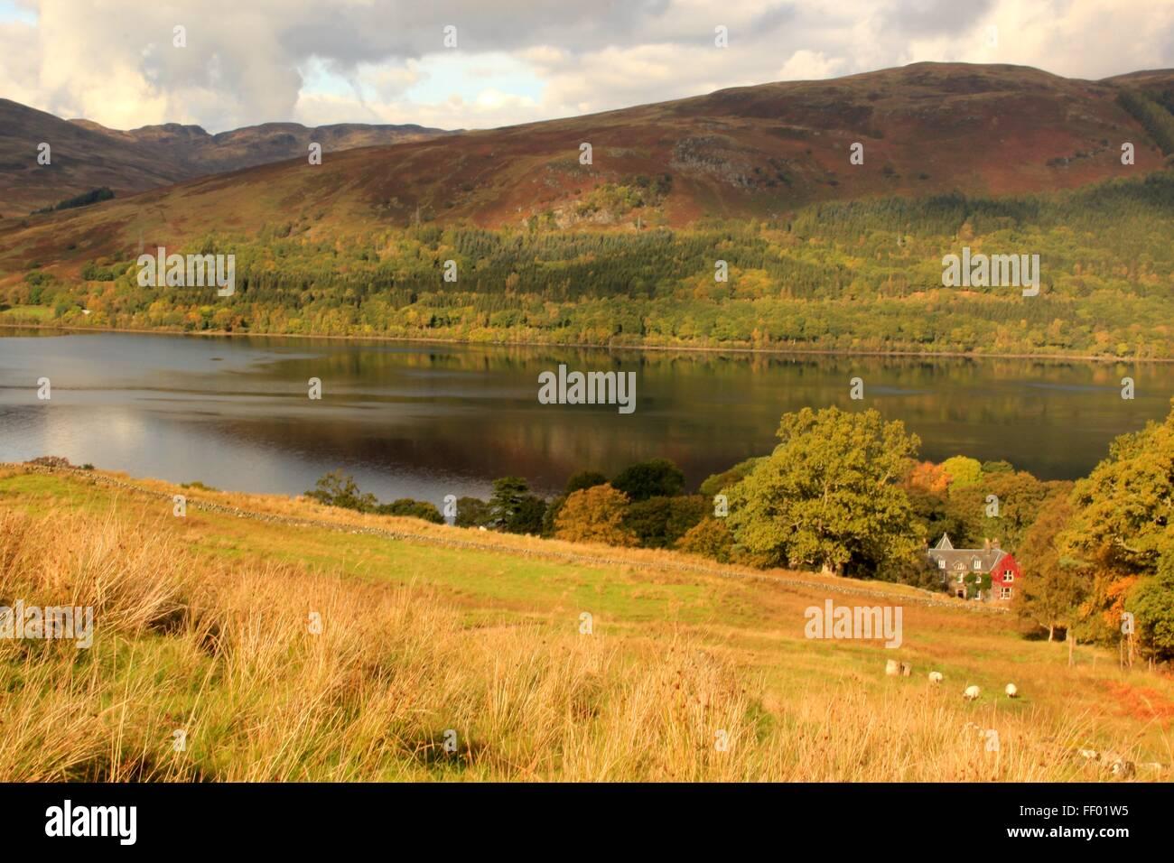 Schafe weiden vor einem roten Efeu bedeckt Haus vor Loch Earn in den schottischen highlands Stockbild
