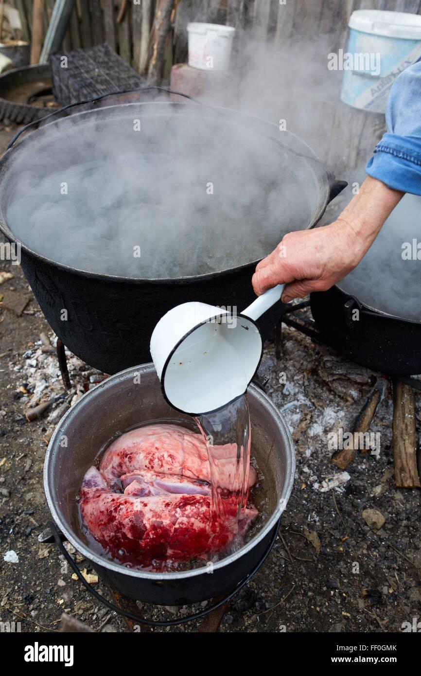 Hand eine alte bauer frau gie t kochendes wasser ber frisch geschlachtet schwein lunge - Warmflasche kochendes wasser ...