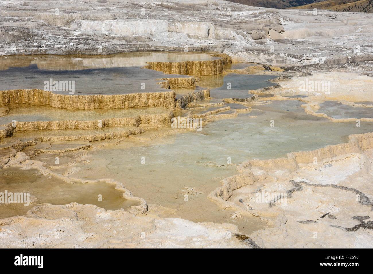 Kanarischen Frühling, Travertin Terrassen, Mammoth Hot Springs, YeRMRMowstone NationaRM Park, UNESCO, Wyoming, Stockbild