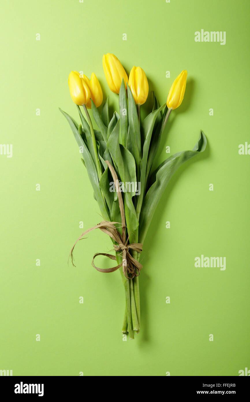 frische gelbe Tulpe auf grünem Hintergrund, Blumen Stockbild
