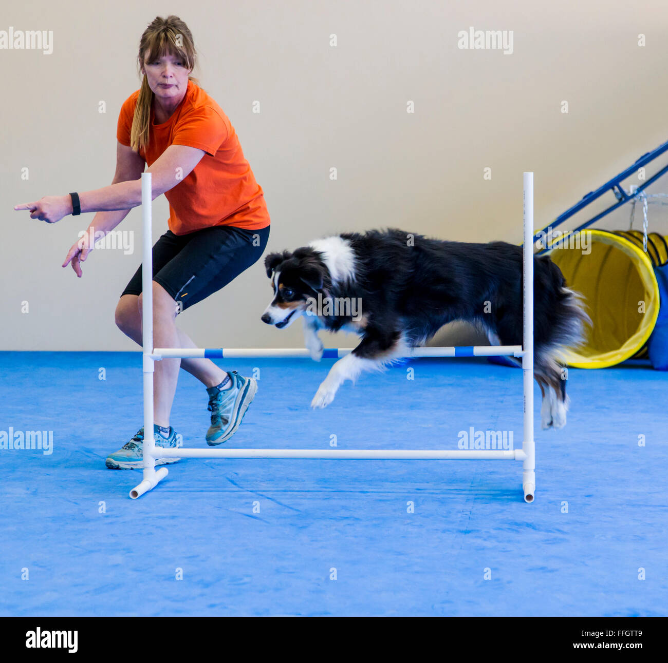 Professionelle weibliche Hundeführer Ausbildung Australian Shepherd Hürde Hindernis springen Stockbild