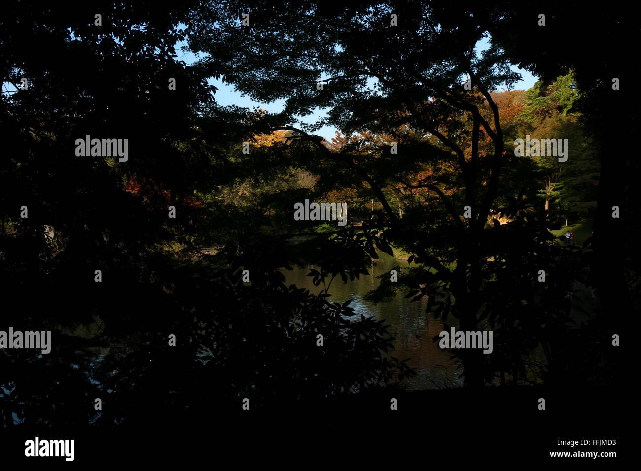 Koishikawa Korakuen Garten, Tokio, Japan. Stadtpark in Herbst-Saison, Herbst Laub auf den Bäumen. Japanische Stockbild