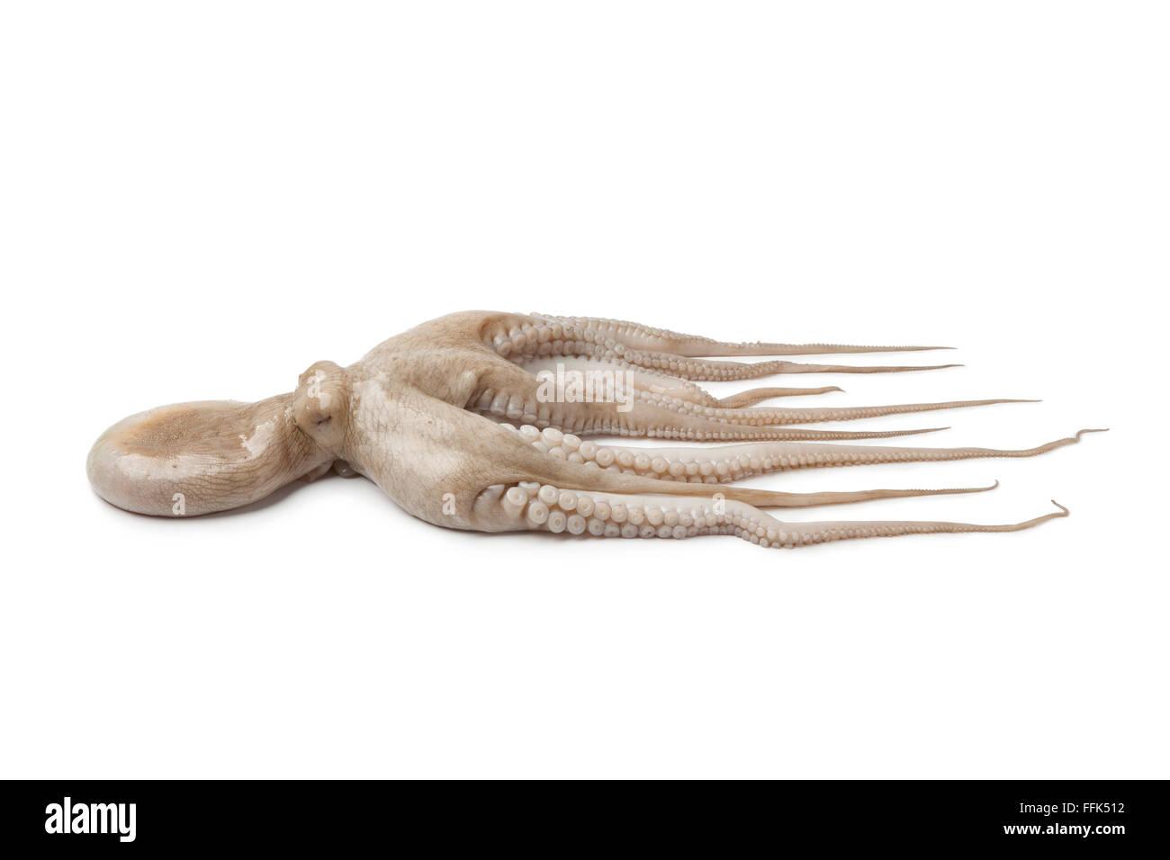 Ganz einzigen frischen rohen Oktopus isoliert auf weißem Hintergrund Stockbild