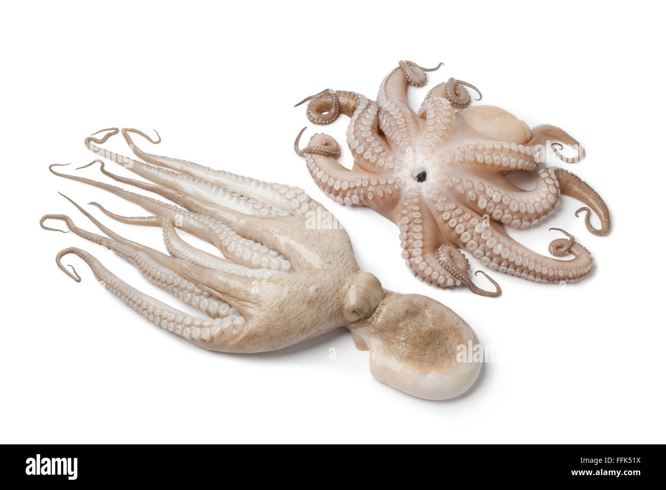 Paar aus frischen rohen Oktopus isoliert auf weißem Hintergrund Stockbild