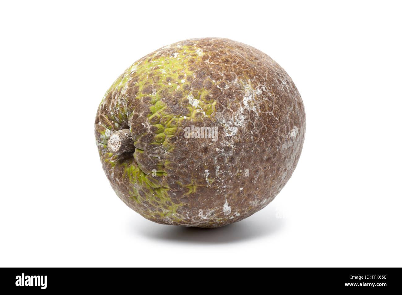 Ganz einzigen Brotfrucht auf weißem Hintergrund Stockbild