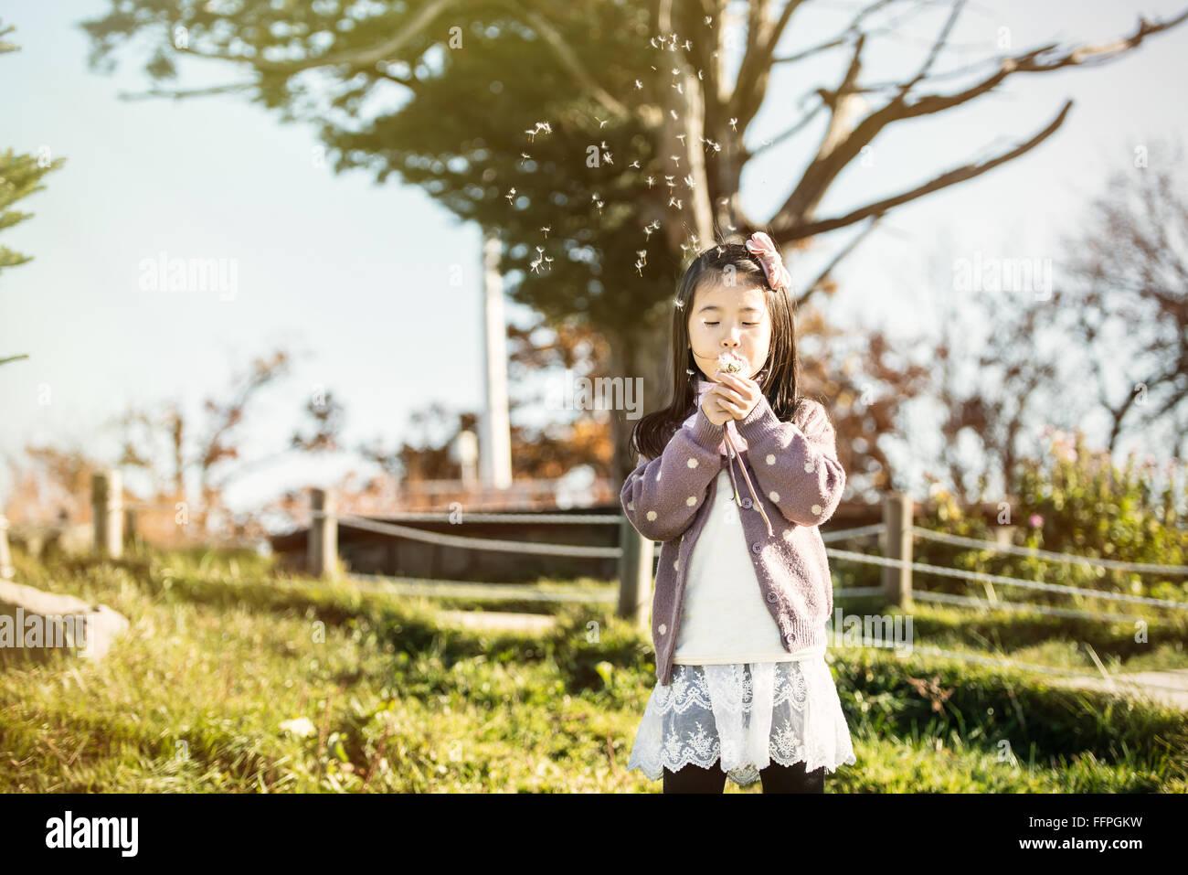 Asien, das Kind bläst einen Löwenzahn in einem Park. Stockbild