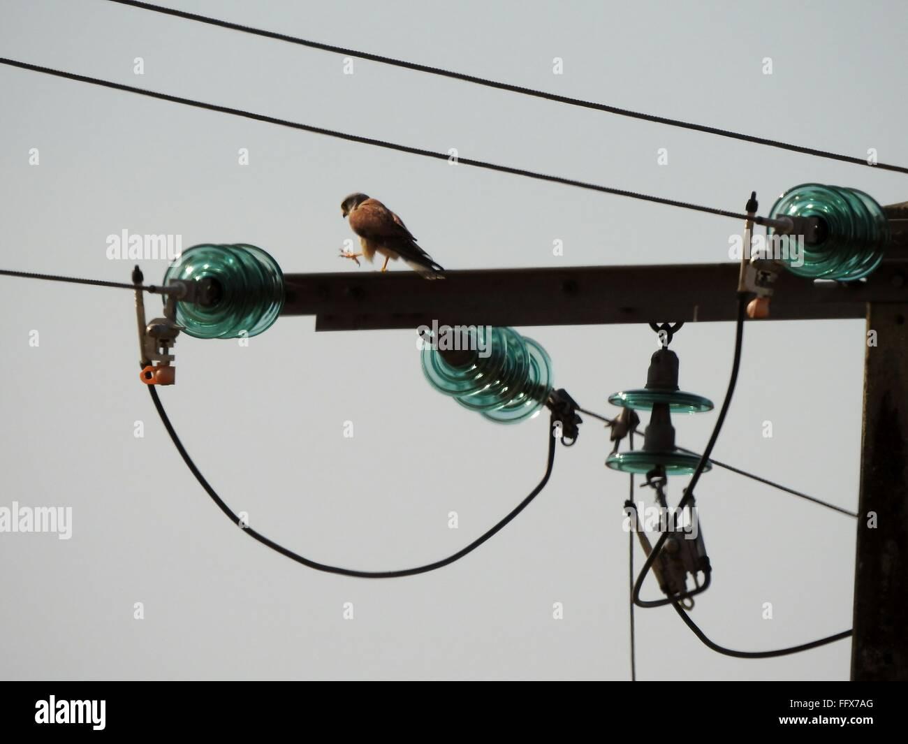Berühmt An Ampere Telefonkabel Fotos - Die Besten Elektrischen ...