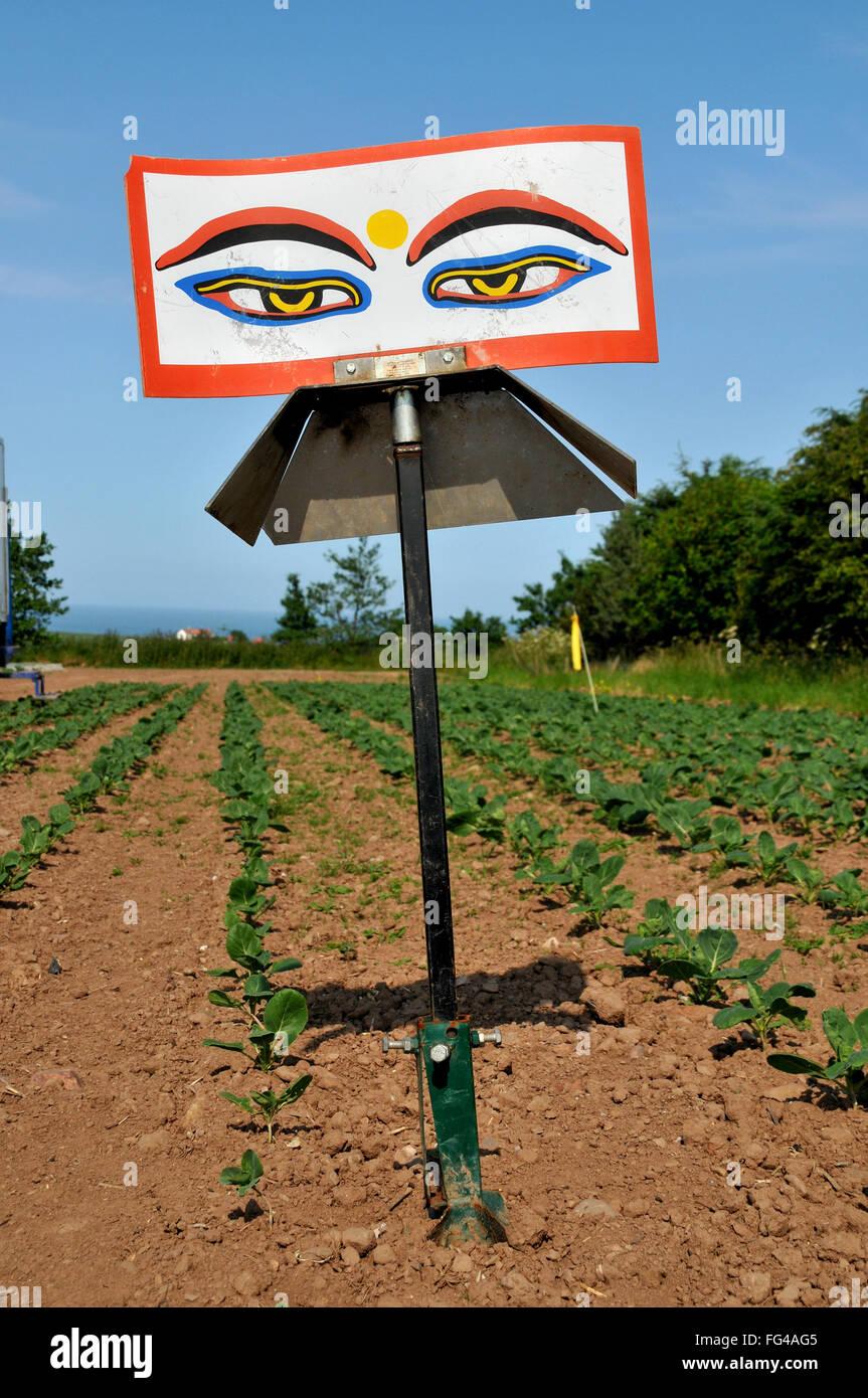 Blinken Buddha Augen, ein Wind angetrieben visuelle Birdscarer in einem Feld der Sämlinge wachsen. Eine Vogelscheuche. Stockbild