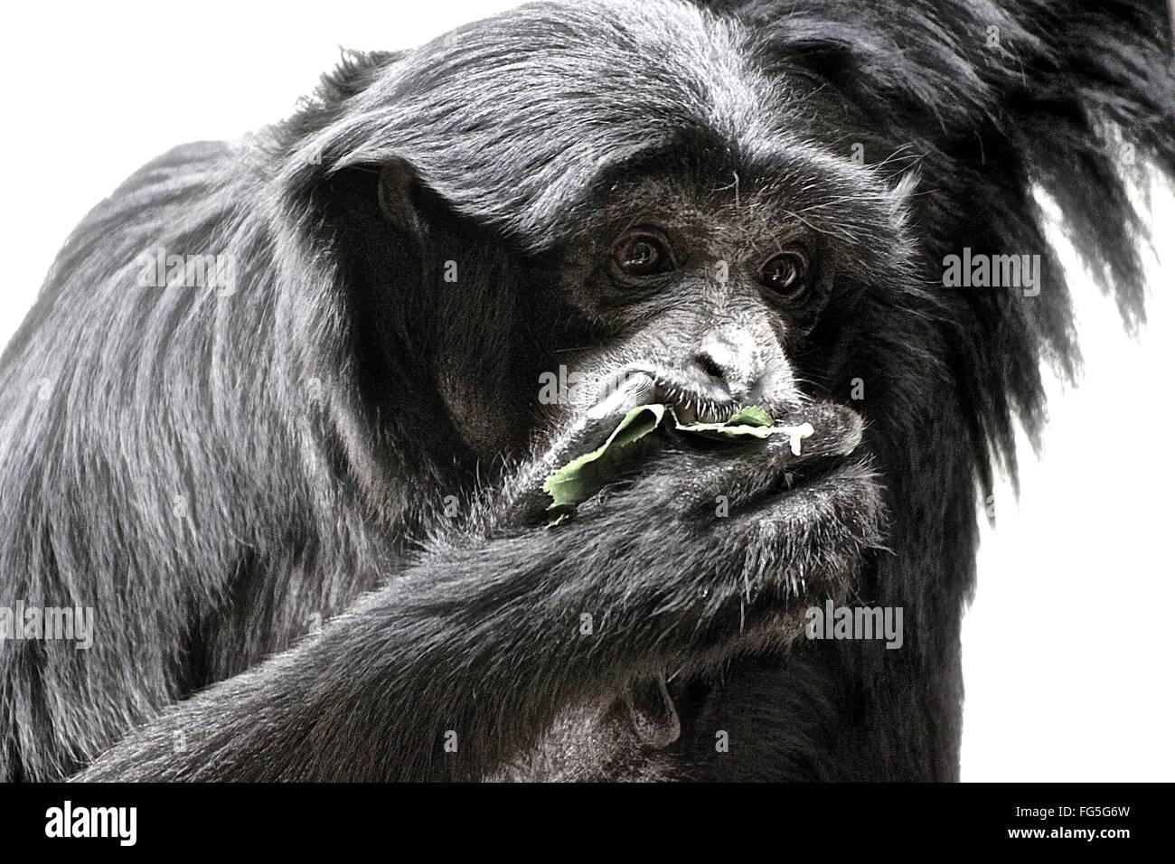 Affen füttern im Zoo Stockbild