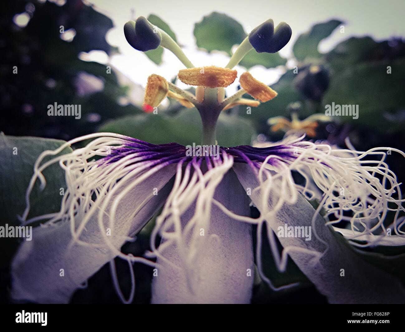 Nahaufnahme von bizarren Blume Stockbild
